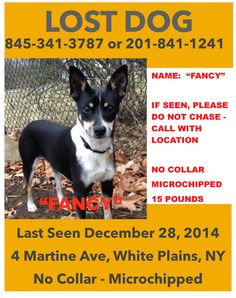 12/29/2014 ~ Please help us spread the word.Fancy was adopted Saturday morning and got away from her new family. She backed out of her collar and took off. Fancy is a very sweet, timid, rat terrier mix. She is...