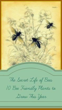 Estle Schipp Farm : 10 Plants to Grow to Help the Bees