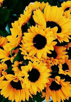 flowers, yellow, and sunflower image Tumblr Backgrounds, Flower Backgrounds, Wallpaper Backgrounds, Iphone Wallpapers, Flower Background Wallpaper, Sunflower Wallpaper, Love Flowers, Beautiful Flowers, Sunflower Images