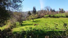 Estampa primaveral #Asturias