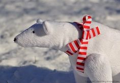 Tilda Polar Bear