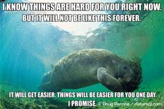 "[Image description: A West Indian manatee in open water, holding and chewing through a mass of sea grass. TEXT: ""I know things are hard for you right now. But it will not be like this forever. It will get easier. Things will be easier for you one day. I promise.""]  (Image credit to Doug Perrine and Arkive.org)"