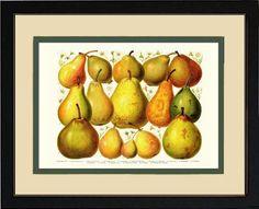 Pears Fruit Art Print   Cream/Green Mat Cherry Frame #PearArt #VintagePrint #RestoredBotanical
