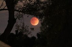 ☆SUPER RED BLOOD MOON LUNAR ECLIPSE 9-27-2015☆  By Donna - the moon looked just like this to me last night, only I saw it from the darkness of the Sonora desert. So exciting!