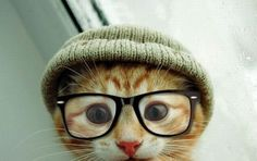 Hipster Ginger Cat.