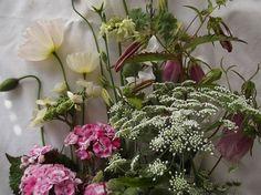 Poppies, Sweet William, Campanula and Amni