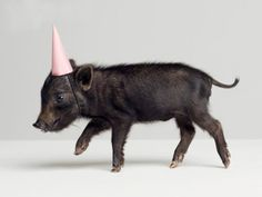 pig in a party hat
