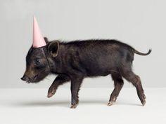 ...pig!
