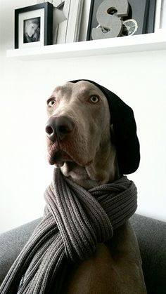 I typed in hipster dogs and I just had repin them all  look how cute they are especially the Irish one