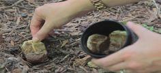 Prende le bustine de tè usate e le pianta in giardino, il motivo è assolutamente da copiare!