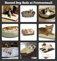 Dog beds on pinterest heated dog bed heated pet beds and your dog