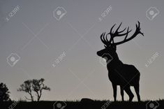 Red Deer, South Island, West Coast, New Zealand, Waterfall, Photo Editing, Moose Art, Silhouette, Stock Photos