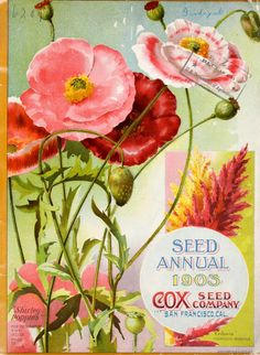 Front cover of 'Seed Annual 1903′ from Cox's Seed Company with an illustration of Shirley Poppies and Celosia. San Francisco, Cal. U.S. Department of Agriculture, National Agricultural Library. Biodiversity Heritage Library. archive.org