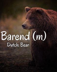 Dutch Names, Brown Bear, Animals, Animales, Animaux, Animal, Animais