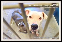 8-27-14  URGENT help needed for these dogs.