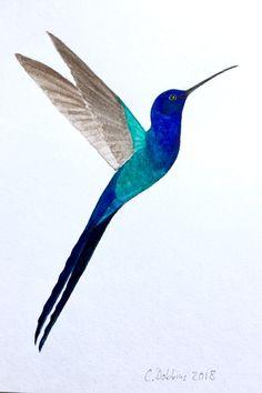 Swallow-tailed Hummingbird (Campylopterus. macrourus)