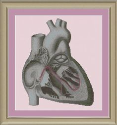 Cross-section human heart: anatomy cross-stitch pattern. $3.00, via Etsy.