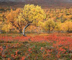 Pallastunturi, Finland
