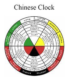 Órgãos da Medicina Chinesa de acordo com a circulação da Energia Alimentícia.