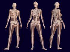Female Skeleton Anatomy - Pierre A. Riffard - Wikipedia, the free encyclopedia Anatomy Bones, Body Anatomy, Anatomy Art, Pelvis Anatomy, Girl Anatomy, Anatomy Images, Female Skeleton, Women Skeleton, Human Skeleton Anatomy
