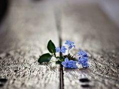 Dél-Alföldi Művészeti Kör: Bakos Erika - A vers kékvirág