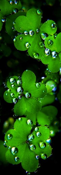 54 Ideas For Photography Nature Flowers Water Droplets Go Green, Green Colors, Pretty Green, Green Eyes, Foto Macro, Fotografia Macro, Macro Photography, Levitation Photography, Winter Photography