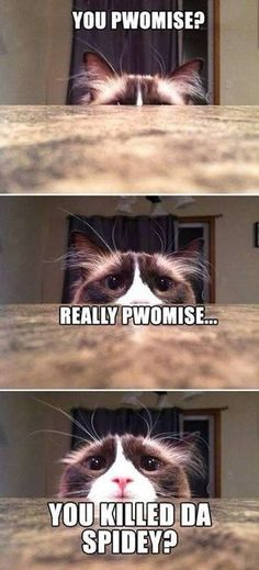 I personally love memes and funny cat memes are my personal favorite. Who could resist adorable images of cats, dogs, and other animals next to a funny tagline? Cat Memes To Make You Laugh Until You Cry!
