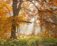 7 Autumn (Savernake Forest, England) by Peter