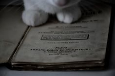 White cat. Old book. Paris. 1894.