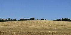 Lestate, il grano, i girasoli