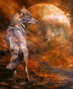 ANIMAUX ,loups,wolfs