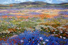 Interesting places to visit in South Africa. Namaqualand is quite popular with b… - Modern New Africa, South Africa, Flowers Nature, Wild Flowers, Wild Flower Meadow, Farm Paintings, Watercolor Landscape, Nature Pictures, Beautiful Landscapes