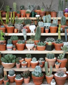 "5,890 Likes, 103 Comments - ARNHEM (@arnhem_clothing) on Instagram: ""Ultimate Cactus Shopping"""