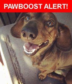 Please spread the word! Ziggy was last seen in South Gate, CA 90280.    Nearest Address: Near San Carlos Ave & Tenaya Ave