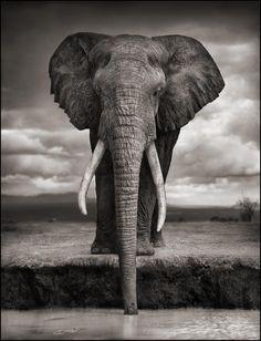 최고의 코끼리 사진 둘, 어떤 게 더 좋으세요? : 문화일반 : 문화 : 뉴스 : 한겨레