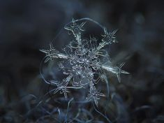 Photographer Tapes a $50 Lens To His P&S Camera To Take Stunning Macro Snowflake Photos | DeMilked