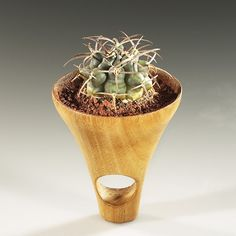 Rings | Barbara Uderzo. Wood sculpture which contains earth and house very small succulent/cactus plants.