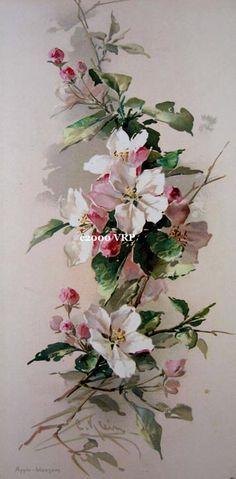 Victorian Rose Prints Gallery : Apple Blossoms Print Catherine Klein Half Yard Long Flower