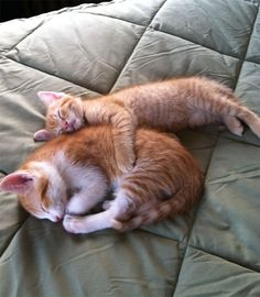 Tiny Kitty Is The Big Spoon
