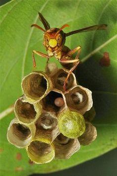Paper Wasp, John Horstman by Eva