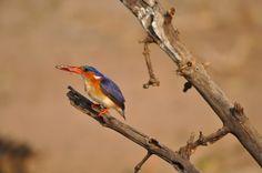 Botswana 772.jpg | Dieren foto van fokjeheite | Zoom.nl