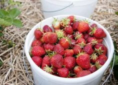 How to Easily Remove Strawberry Stems