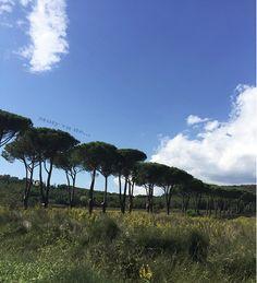 #Molyvade #viaje #EscapadaalmardeToscana  http://molyvade.blogspot.com/2016/10/escapada-al-mar-de-toscana.html