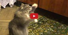 The Dancing Cat!