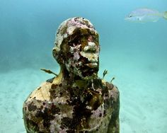 MUSA Museo Subacuatico de Arte   An Underwater sculpture museum!