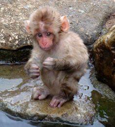 Lil baboon pt 4