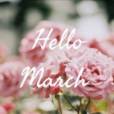 Hello March...Spring is right around the corner !! The robins are already here !!!  Have a great day