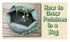 How To Grow Potatoes in a Bag - Virily