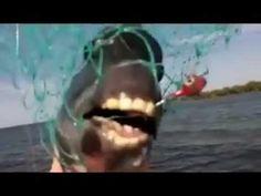FUNNY Fish & Horse teeth