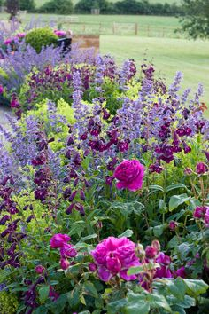 Garden design portfolio: Nicholsons Garden Design, Oxfordshire Looks like catmint, penstemon 'midnight', ladys mantle, and a dark pink rose.